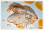 Куриные грудки с соусом из грецких орехов